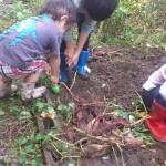 ガーデニング、家庭菜園の基本用語